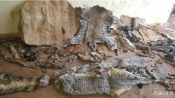 3 traffickers arrested with lion and leopard skins