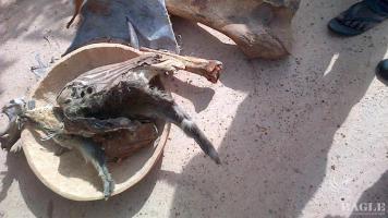 Bushmeet siezed in Benin
