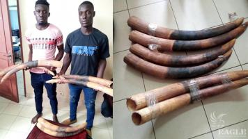 2 ivory traffickers arrested with 6 tusks