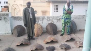 2 traffickers arrested with 13 sea turtle shells