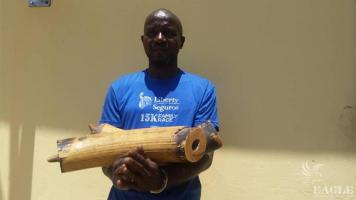 An ivory trafficker arrested with two tusks