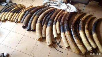 4 ivory traffickers arrested with 128 kg of ivory