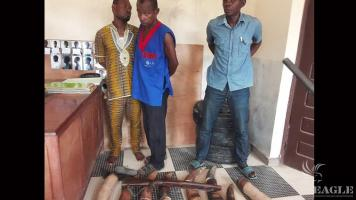 3 ivory traffickers arrested with 7 tusks