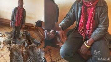 A trafficker arrested with 5 large leopard skins