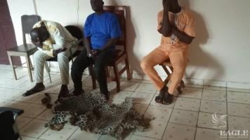 4 traffickers arrested with a leopard skin