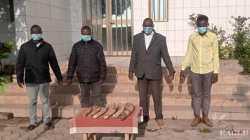 4 traffickers arrested with 6 tusks