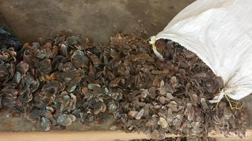 A trafficker arrested  with 23kg of pangolin scales