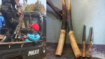 6 ivory traffickers arrested