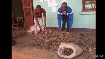3 traffickers arrested with more than 70 kg of pangolin scales