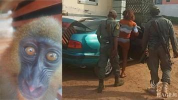 A live animals' trafficker arrested