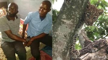 2 traffickers arrested with a leopard skin
