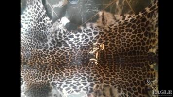3 traffickers arrested with 3 leopard skins