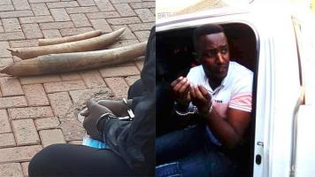 Two Rwandese traffickers arrested with three elephant tusks