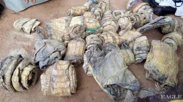 A trafficker arrested with 30 crocodile skins