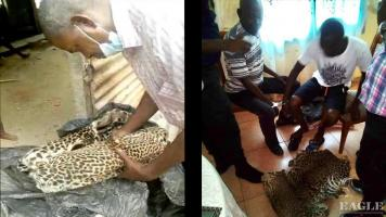 2 traffickers arrested with a leopard skin and a piece of ivory