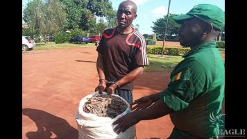 a trafficker arrested with 60kg of pangolin scales