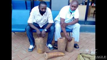 2 traffickers arrested with 4 large pieces of ivory