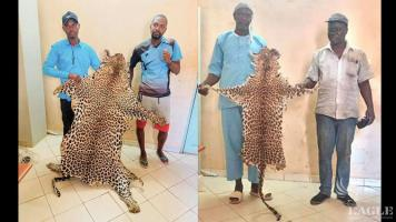 4 traffickers arrested with 2 leopard skins