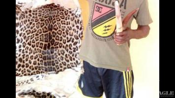 A trafficker arrested with a leopard skin, 2 ivory tusks, pangolin scales and more contraband
