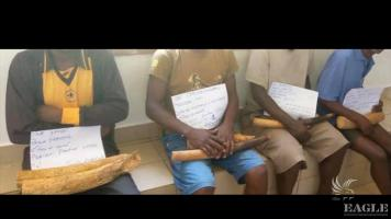 4 arrested attempting to sell 4 ivory tusks