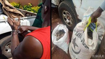 A trafficker arrested with 77kg of pangolin scales