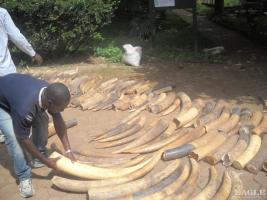 September 2009, Cameroon: 2 tonnes of ivory seized in an operation in Duala