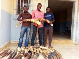 December 2014, Gabon: Arrested in Libreville for ivory trafficking by gendarmeries. 29 ivory tusks totaling 110 kg were seized.
