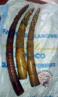 March 2015, Congo: 3 traffickers were arrested with 3 tusks in Pointe Noire.