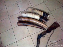February 2015, Gabon: 2 arrested for ivory trafficking