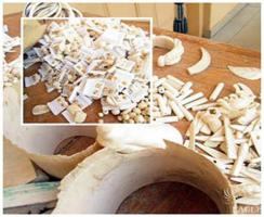 January 2015, Togo: Seizure of 35 kg of ivory, one trafficker arrested