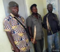 February 2015, Cameroon: 3 arrested for ivory trafficking