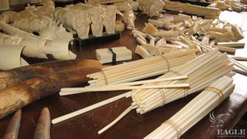 July 2004, Cameroon:  Chinese connection exposed, ivory traffickers arrested