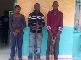 New arrest in Gabon: 2 traffickers and poacher with ivory