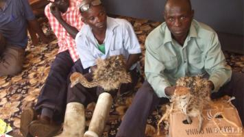 A trafficker  arrested for trading in ostriches.
