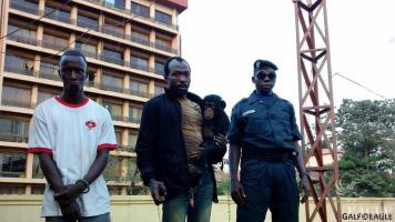 Two chimp traffickers arrested, baby chimp rescued