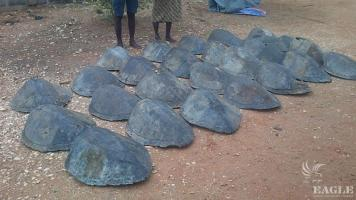 2 traffickers with 26 sea turtle shells arrested