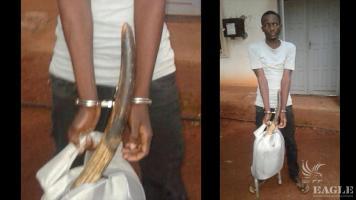 An ivory trafficker arrested