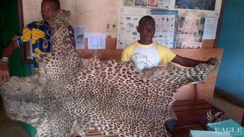 2 leopard skin traffickers arrested