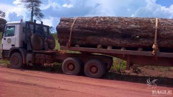 AALF in a clampdown on illegal logging!