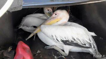 3 bird traffickers arrested