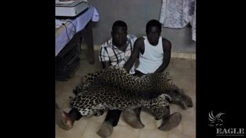 2 leopard skin traffickers arrested