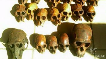 An ape skulls trafficker arrested