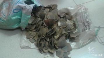 A trafficker arrested with 15 kg of pangolin scales