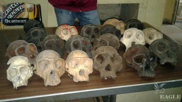 One trafficker, 19 skulls!