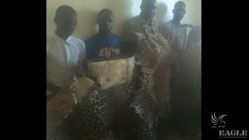 4 traffickers arrested with 4 leopard skins!