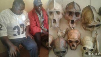 Two traffickers arrested with 9 ape skulls