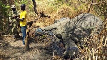 3 ivory traffickers arrested