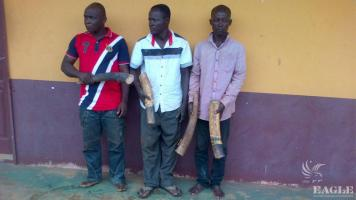 5 ivory traffickers arrested