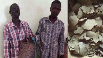 2 traffickers arrested with 45 kg giant pangolin scales