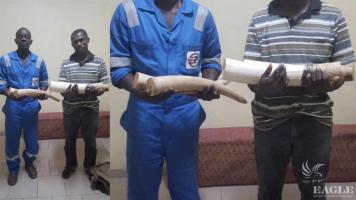 2 ivory traffickers arrested with 2 tusks